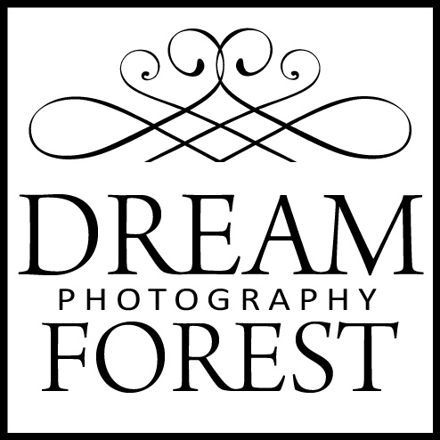 Top rated wedding photographers: DreamForest Wedding Photography / 婚攝濬森