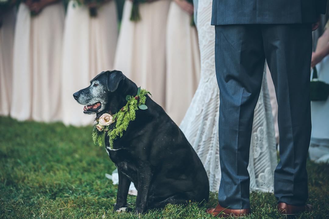 Asheville, North Carolina Wedding Photographer - Bryce Lafoon Photography